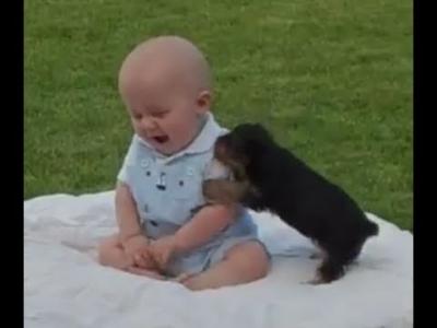 【いいね!】赤ちゃんと子犬の戦い?!いいね!