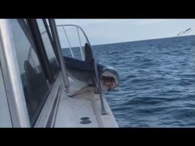 【衝撃!】サメがボートにジャンプして入り込んできた!