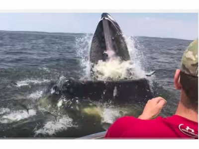 【衝撃!】ボートで釣りをしてたら突然ザトウクジラ!