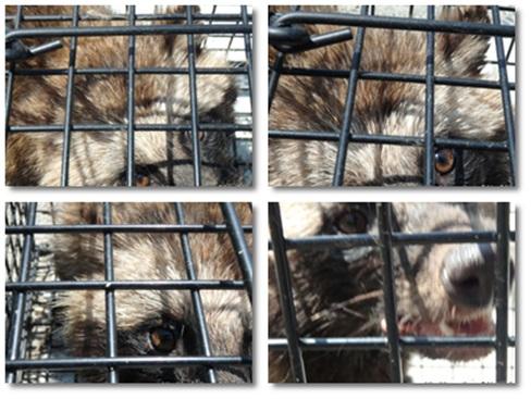 cats222.jpg