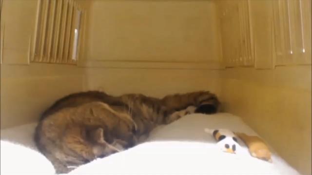 良く寝るプラン♪01