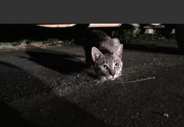 野良猫グレン(仮)登場!10