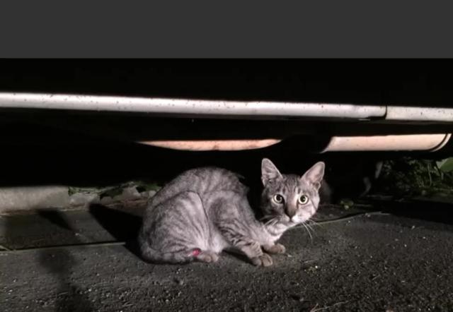 野良猫グレン(仮)登場!08