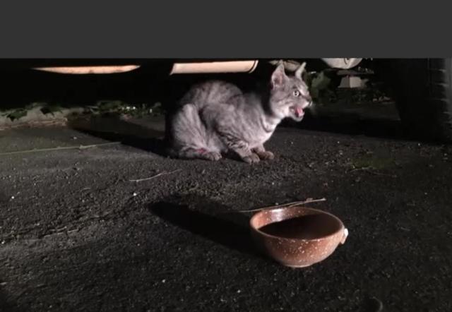 野良猫グレン(仮)登場!12