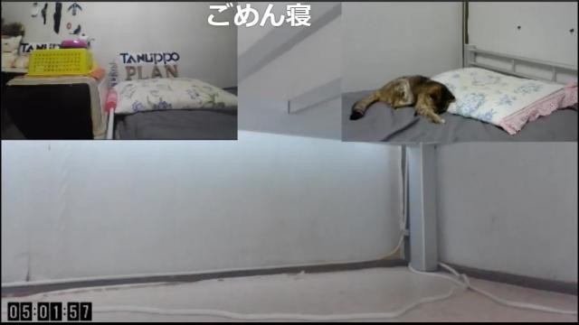 鳴き疲れて熟睡!01