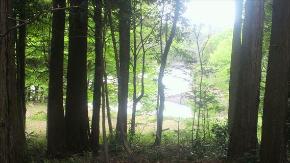 県道52号線から三野輪池