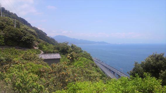 駿河湾とみかん畑