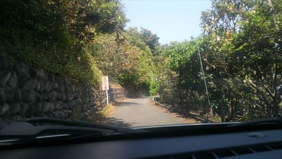 さった峠の道(由比側)6