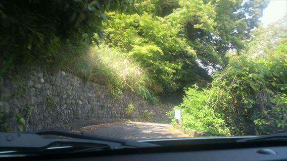 さった峠の道(由比側)8