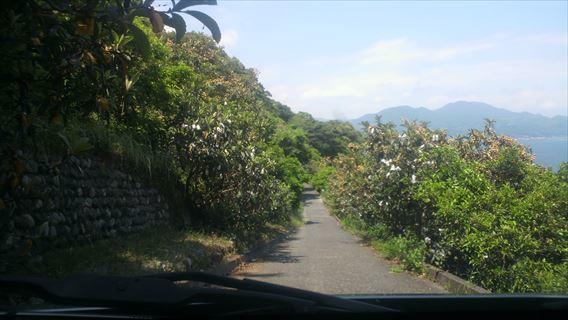 さった峠の道(由比側)9