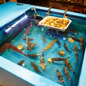 1703_魚_生け簀