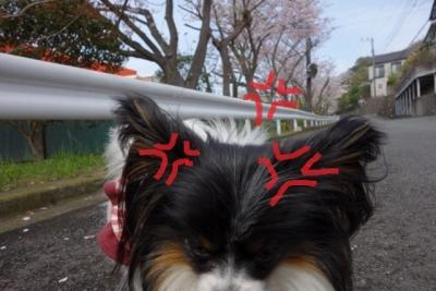 2016桜リベンンジ3