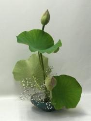 8seanna Lotusb