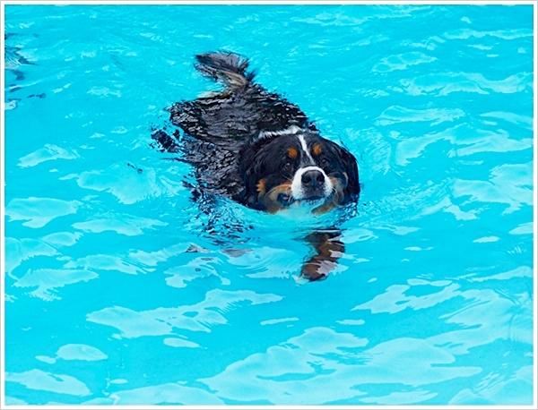 2017-5泳いでる1