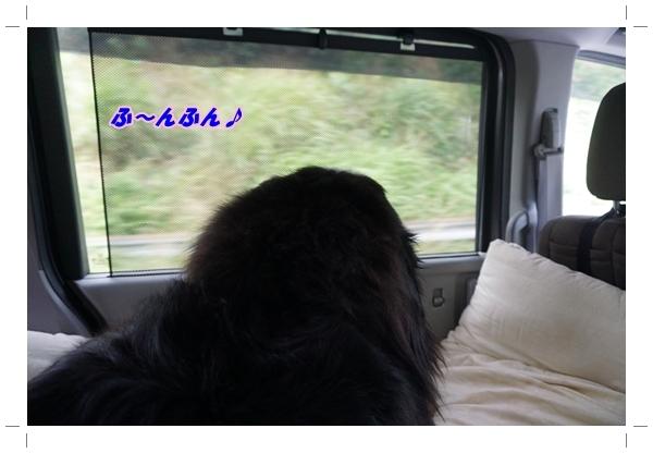 2017-6ごきげん