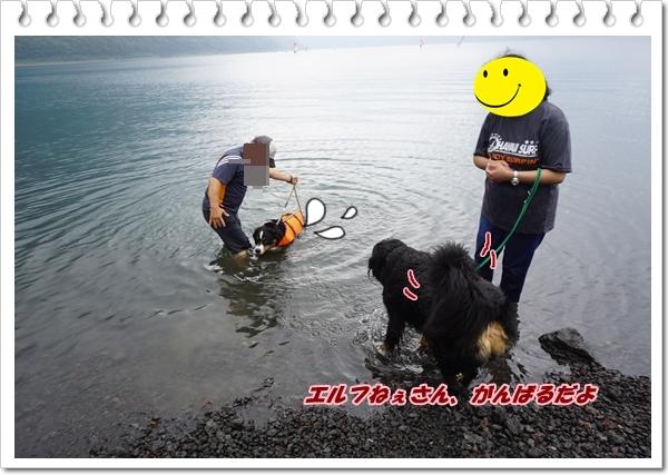 2017-7エルフ、がんばれ