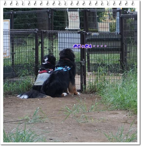 ?2017-9忠犬