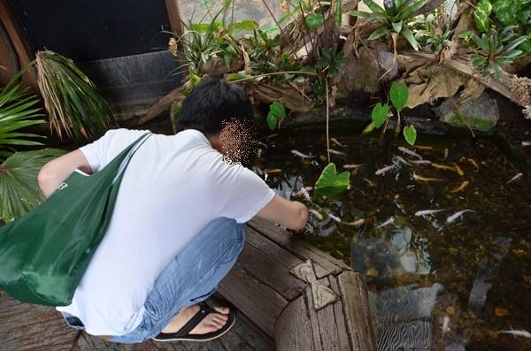 池の金魚?