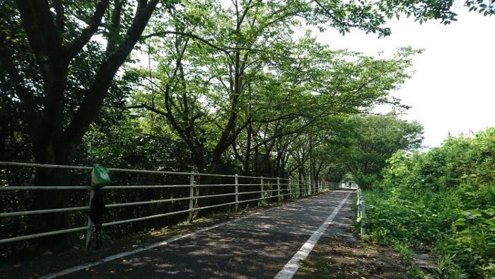 赤野休憩所付近の自転車道