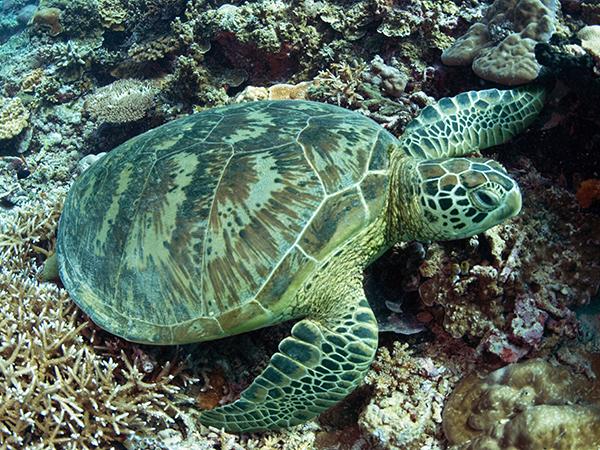 g-turtle_img01-l.jpg