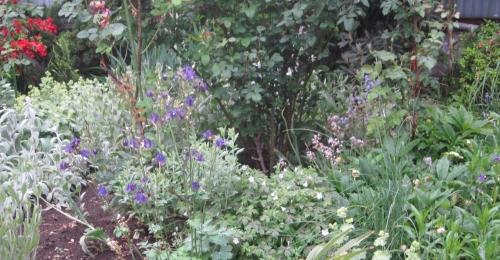 2017 雨の庭 6月1日