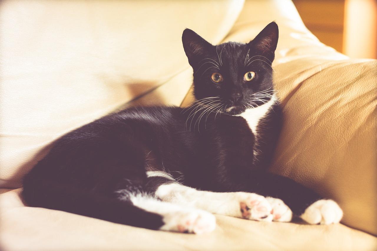 cat-1466614_1280.jpg
