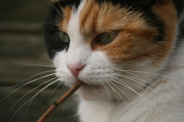 cat-717193_640.jpg