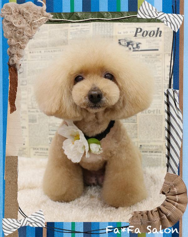 poohちゃん5-1