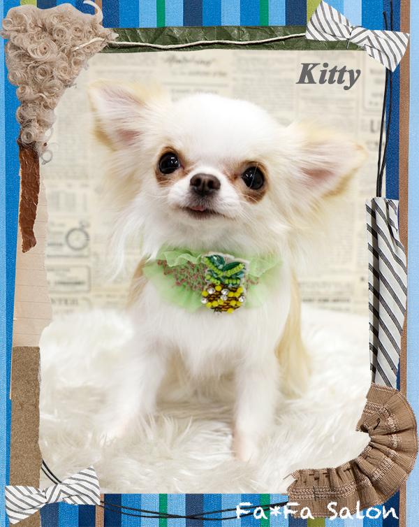Kittyちゃん-5-1