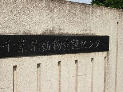 千葉県動物愛護センター