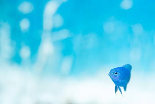 水納島ブルー