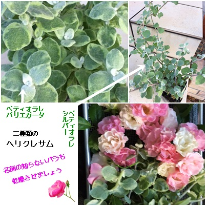 6月 乾燥花2