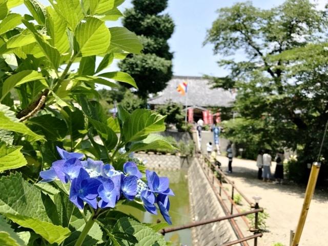 金泉寺 (4)
