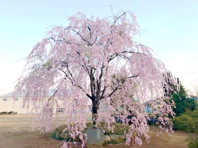 満願寺 (1)