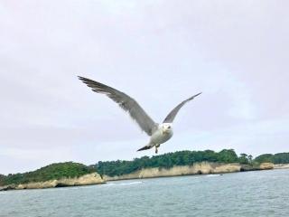 松島湾 (11)
