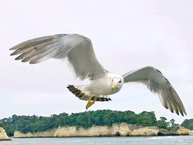 松島湾 (12)