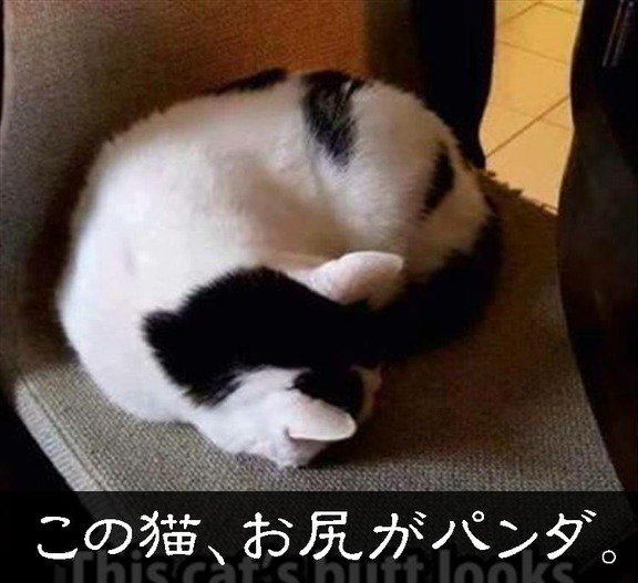 0111d115-s.jpg