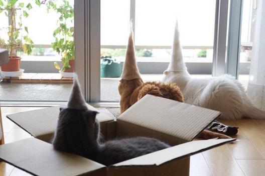 毛玉のとんがり帽子2