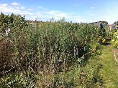 allotment01.jpg