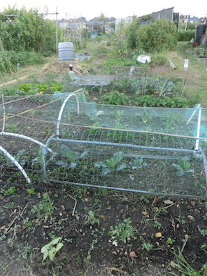 allotment03.jpg