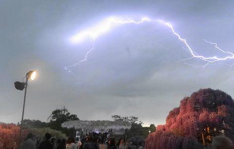 あしかがフラワーパークの雷鳴