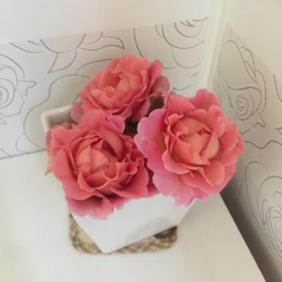 トイレの薔薇