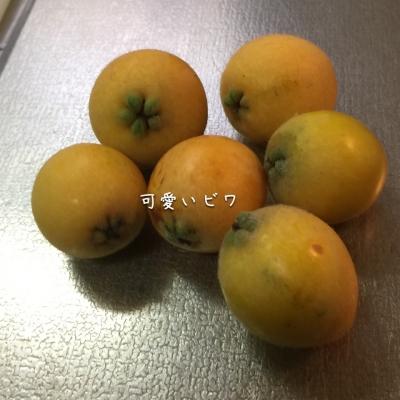 ビワ、収穫〜〜