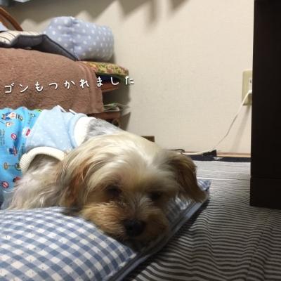 おやすみなさいです