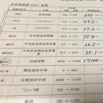 血液検査①