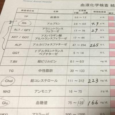 血液検査②