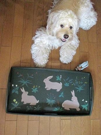 ウサギのおぼん