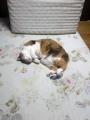 愛猫:2017.05.10
