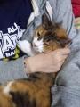 愛猫:2017.05.21
