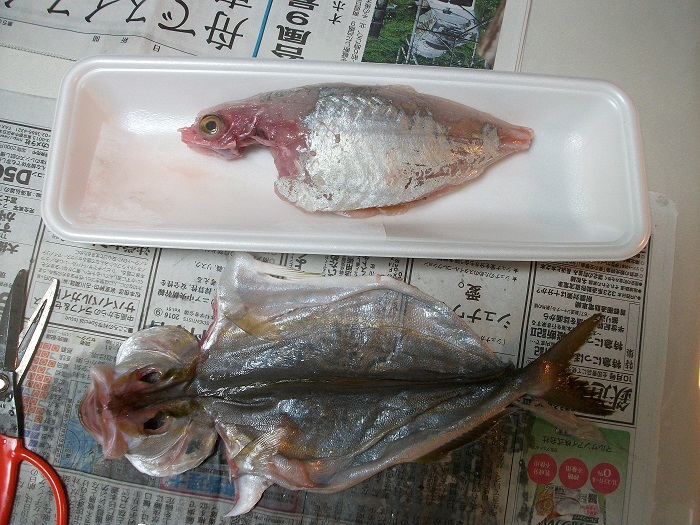 2017_ガクタメ_魚屋 天然堂 ~うおや てんねんどう~_02